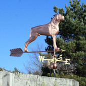 large copper boxer dog weathervane right side view on blue sky background