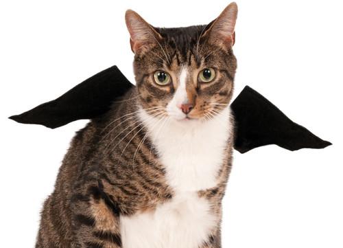 Bat Wings Costume Rubies Pet Shop Small Dog or Cat SM