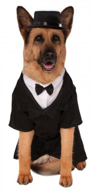 Big Dog Dapper Groom XXL Rubies Pet Shop Costume 2X