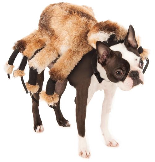 Giant Spider Medium Rubies Pet Shop Dog Costume