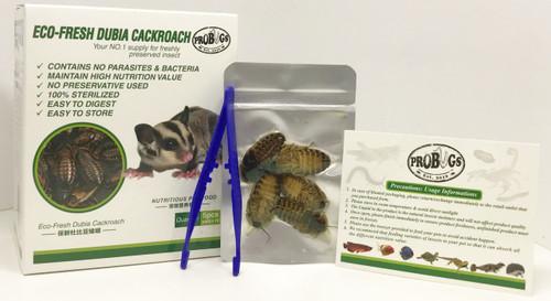 ProBugs Dubia Roaches Box