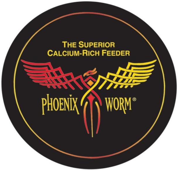 Phoenix Worm Large