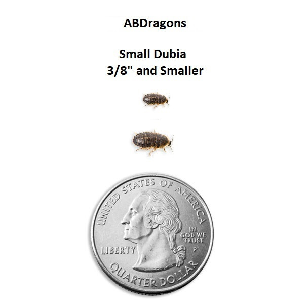 "Dubia Roaches Small 3/8"" and Under"