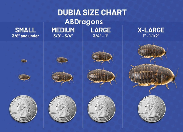 Dubia Roaches Mixed Group