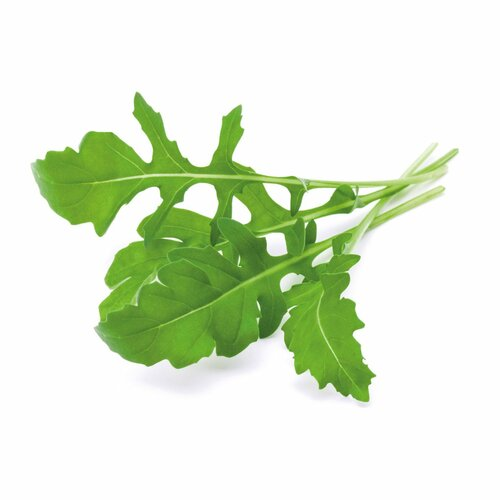 Urban Harvest Seeds - Arugula