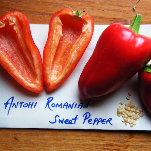 Urban Harvest Seeds - Antohi Romanian Pepper