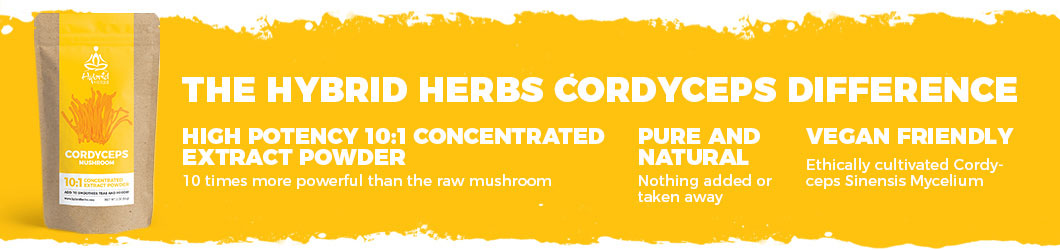 cordyceps-mushroom-powder-difference.jpg
