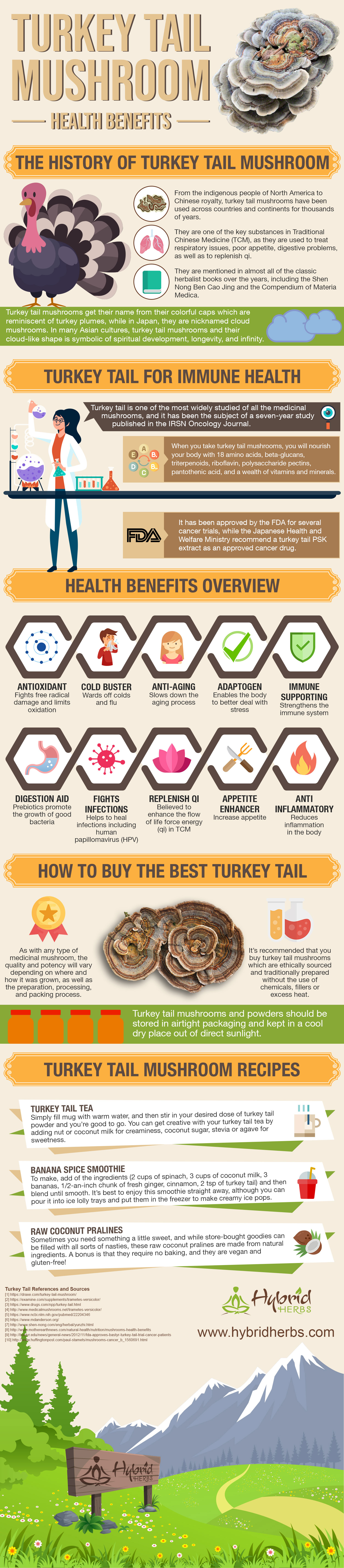 turkey-tail-health-benefits.jpg