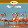 About Flamingos - Level E/7