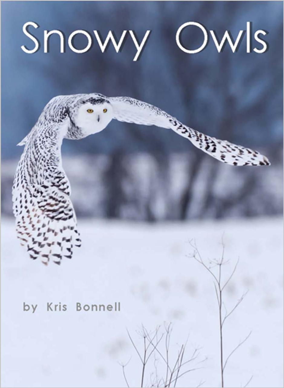 Snowy Owls - Level I/16
