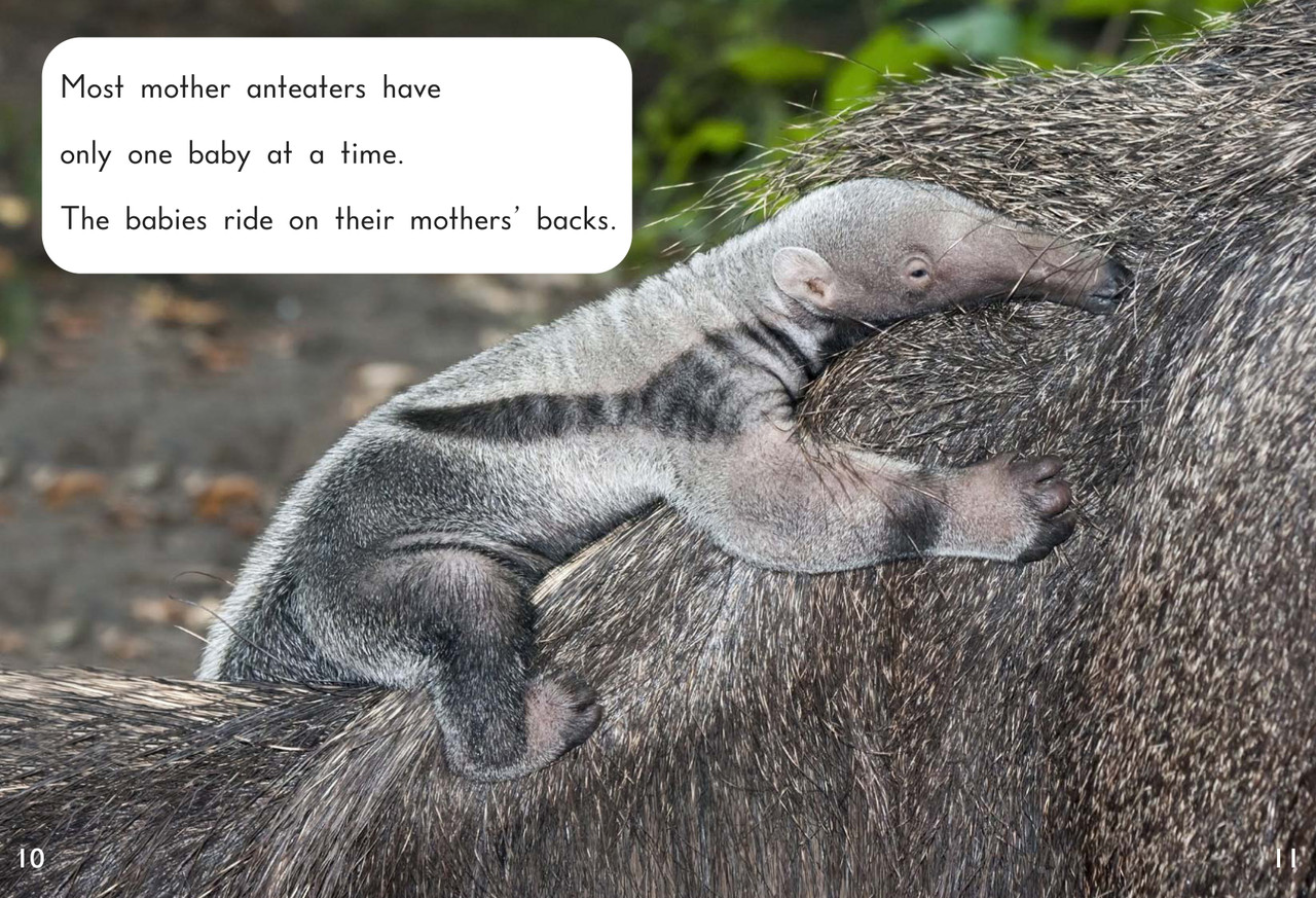 Anteaters - Level H/13