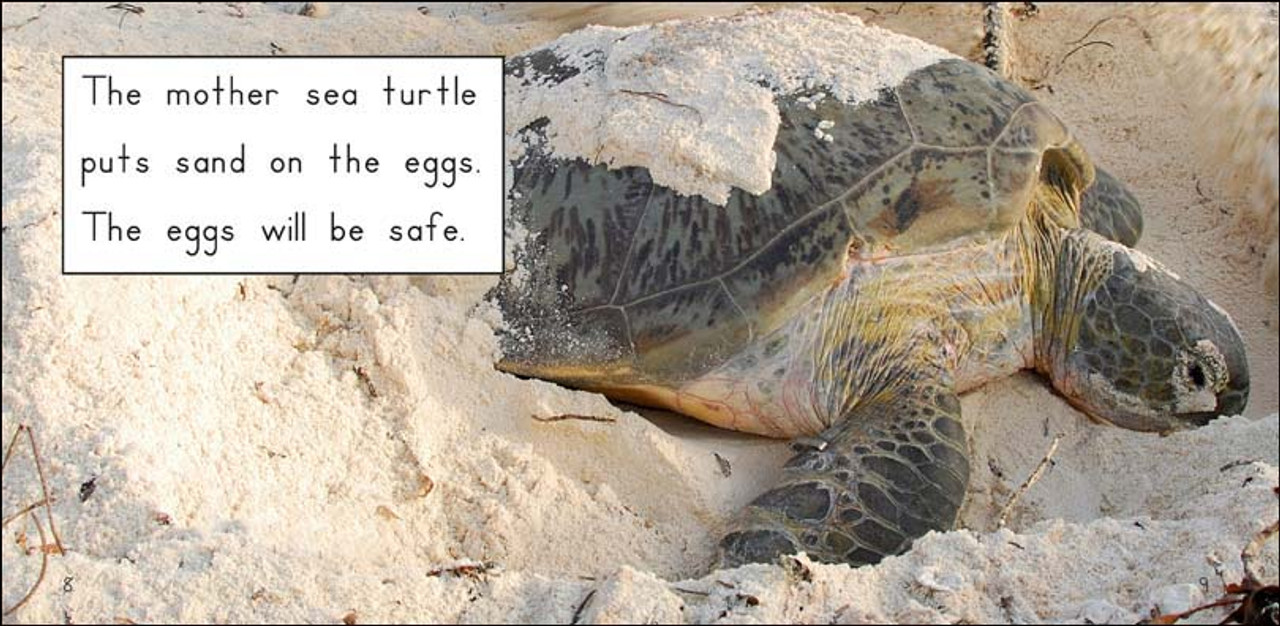 Sea Turtles in the Sand - Level E/7