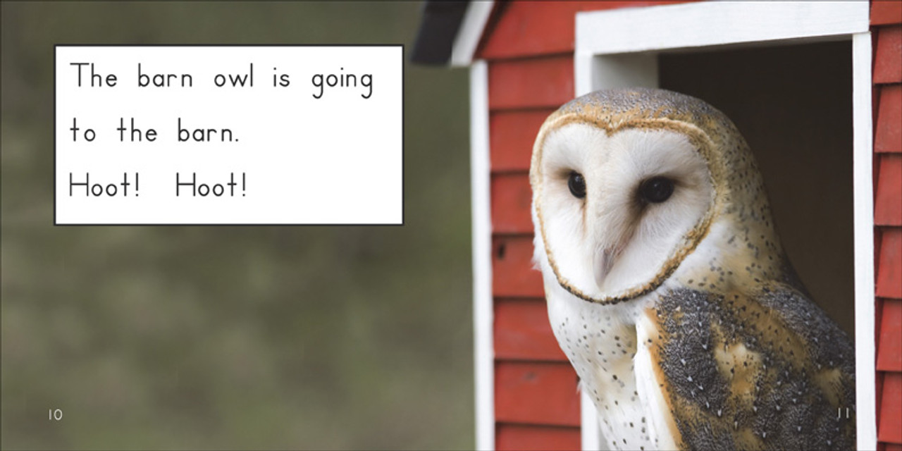 Where Is the Barn Owl Going? - Level D/6