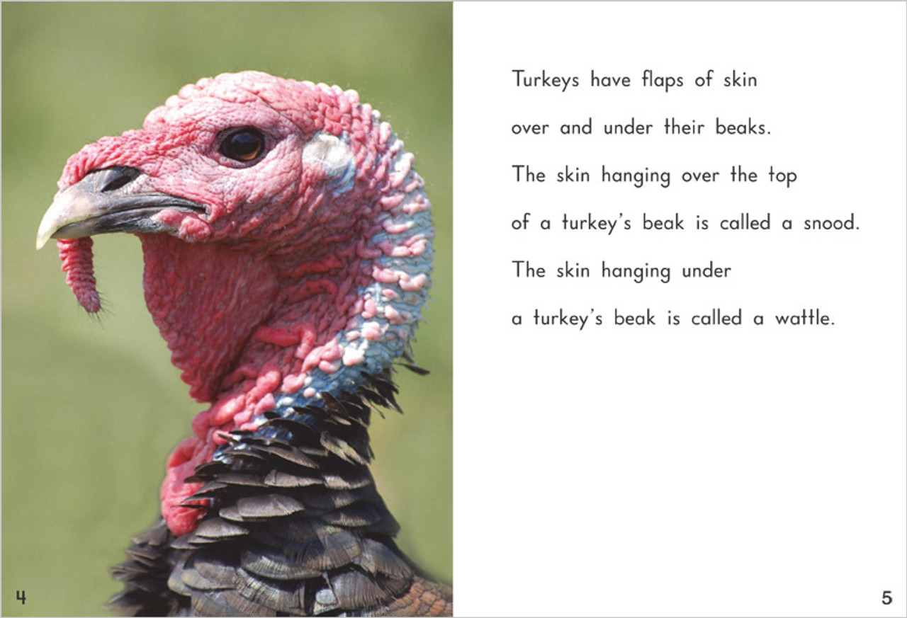 Wild Turkeys - Level K/16