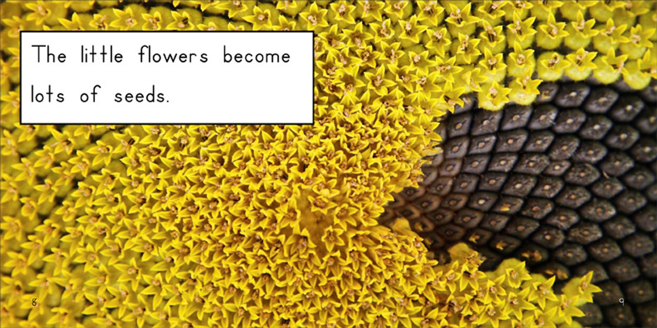 About Sunflowers - Level E/7