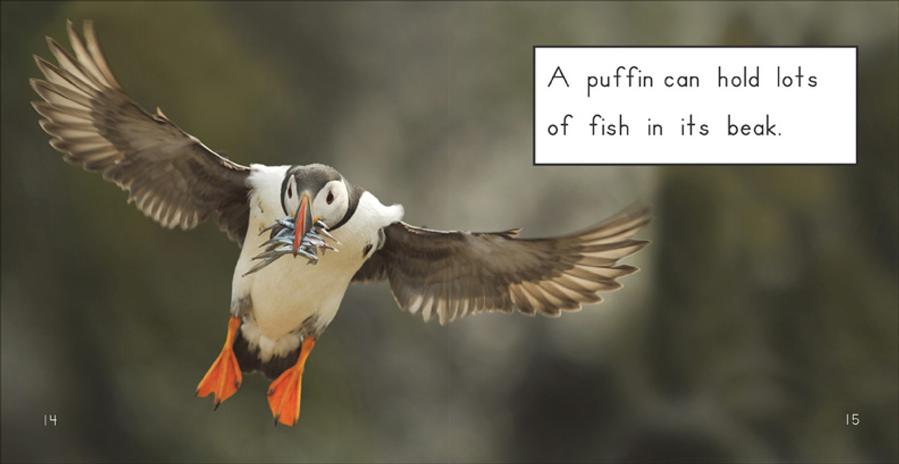 About Puffins - Level E/8