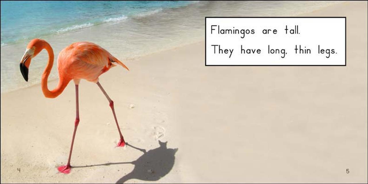 About Flamingos - Level E/7
