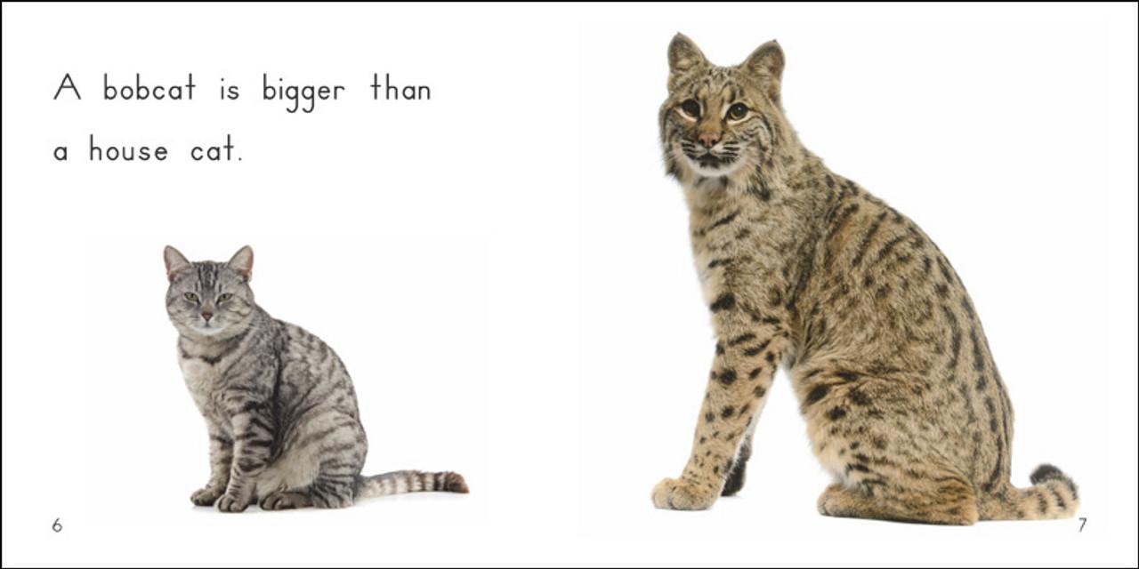 About Bobcats - Level E/7