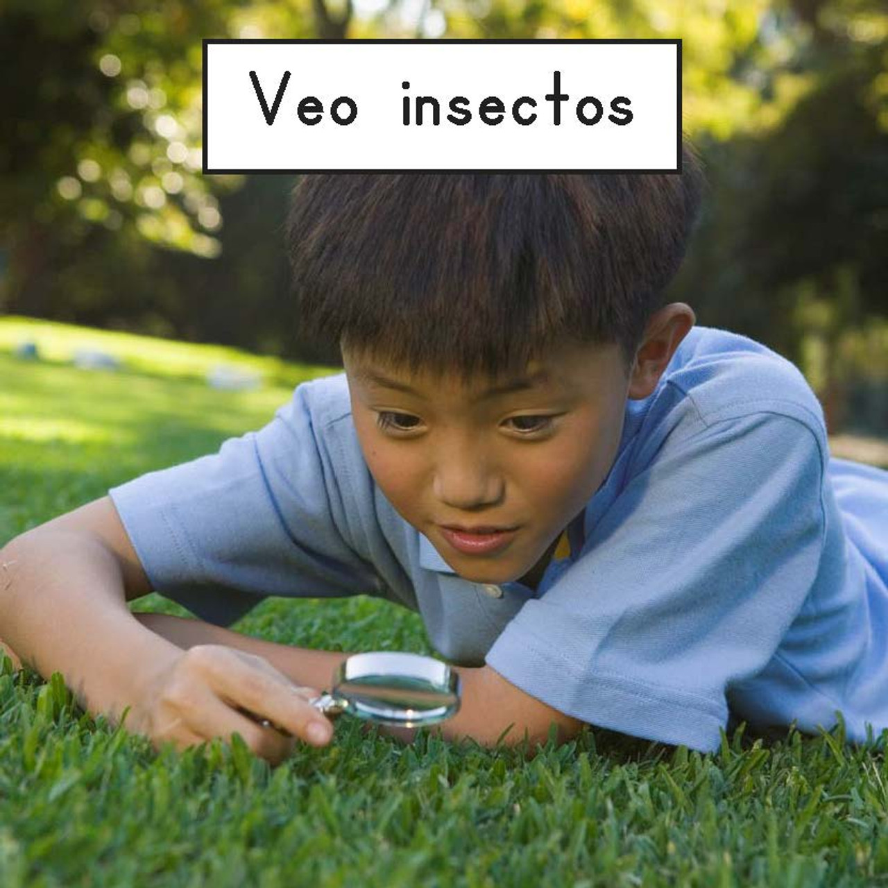 Veo Insectos - Level A/1
