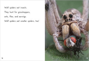 Wolf Spiders - Level J/17