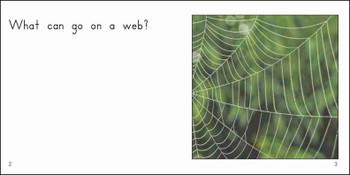 Spiders - Level B/3
