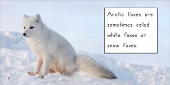 About Arctic Foxes - Level E/10