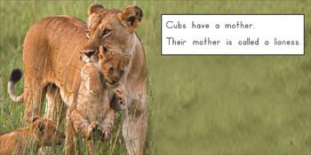 About Lion Cubs - Level E/7