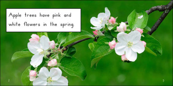 About Apple Trees - Level D/6