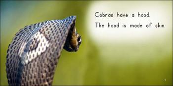 About Cobras - Level E/7