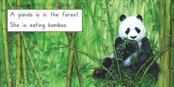 The Giant Panda - Level D/7