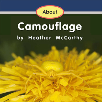 About Camouflage  - Level B/2