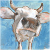 Nosy Cow Picture