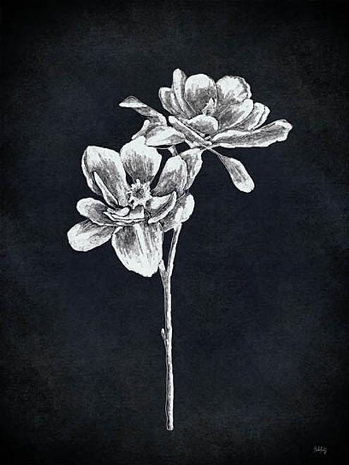 Magnolia Stem Picture