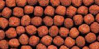 cichlid-gold-stock-photo-7-medium-pellet.jpg