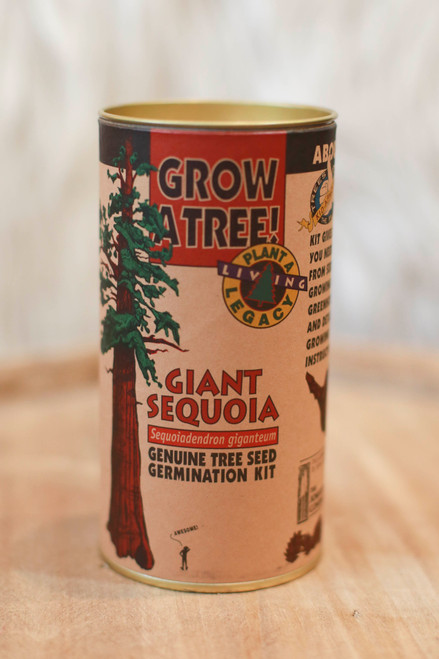 Giant Sequoia (California Redwood) Seed Grow Kit