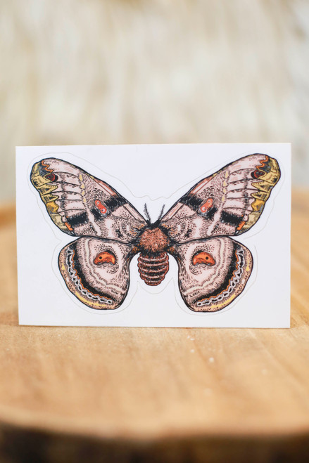 Slow Loris Moth Sticker