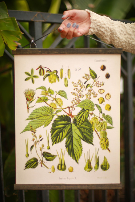 Vintage Botanical Beer Hop Flower Canvas Wall Hanging