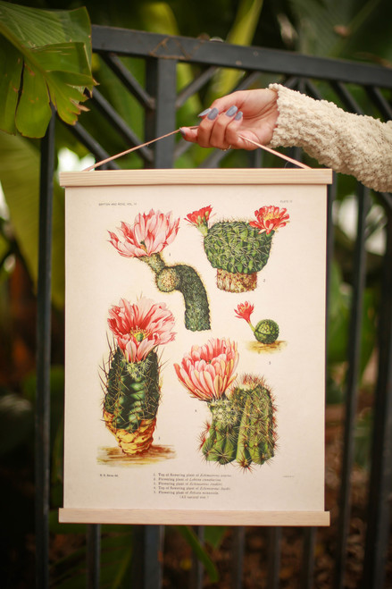 Vintage Botanical Cactus Blossom IV Canvas Hanging