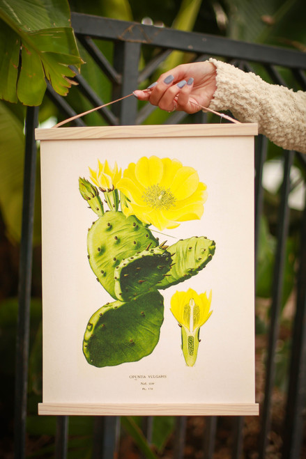 Vintage Botanical Prickly Pear Cactus Canvas Hanging
