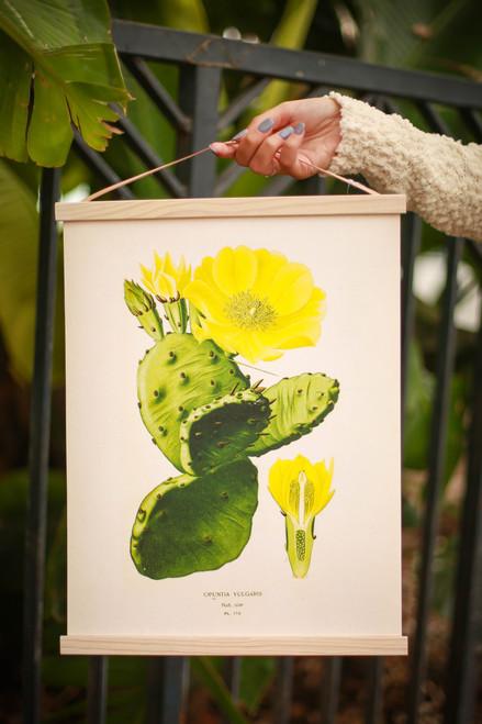 Vintage Botanical Prickly Pear Cactus Canvas Hanging