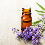 Lavender Essential Oil.