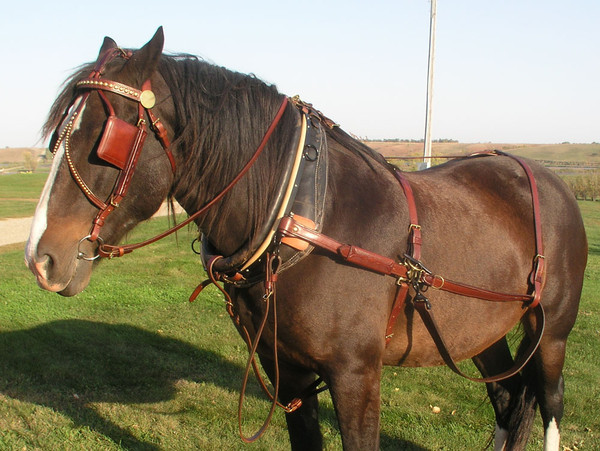 Concord Stagecoach Harness