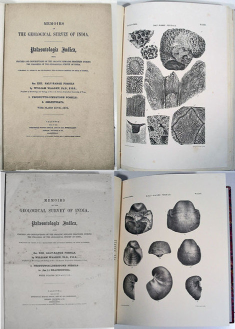 Rare Paleontology Books: Waagen, William; Figures and Descriptions of the Organic Remains: Geological Survey of India. Salt Range Fossils. 1882-87