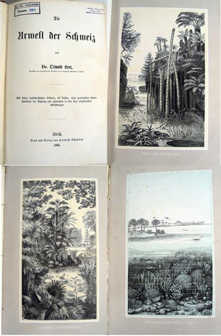 Book by Oswald Heer; Die Urwelt der Schweiz. 1st edition, Zurich, 1865.