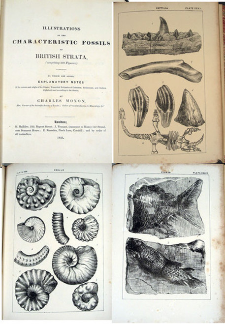 Rare paleontology book by Moxon, Charles; Illustrations of the Characteristic Fossils of British Strata... London, Hippolyte Bailliere, 1841.