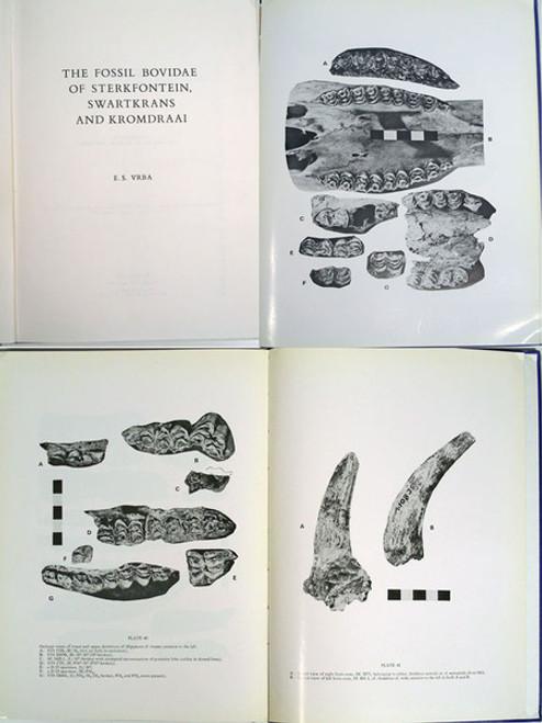 Rare Vertebrate Paleontology Book: Vrba, Elisabeth S.; The Fossil Bovidae of Sterkfontein, Swartkrans and Kromdraai. 1976.