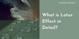 What is the lotus effect in detail? An example of SiO2 and other hydrophobic materials.