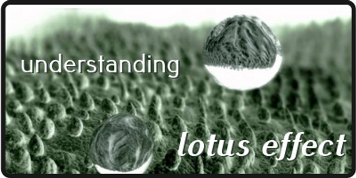 Lotus Effect in Nanotechnology