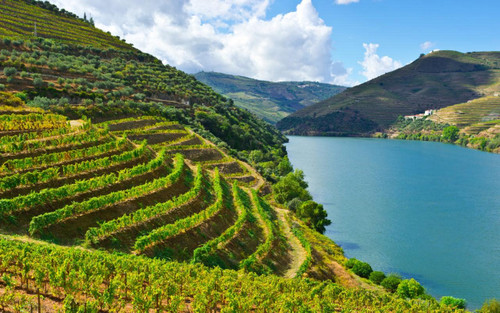 Wines of Portugal Tasting