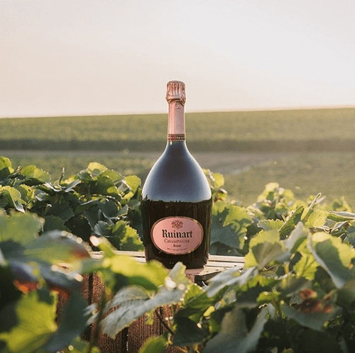 Bottle of Ruinart Rose in the vineyard.